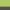 Lime Green/Graphite - 632_29_564