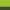 Lime Green/Racing Green - 851_17_560